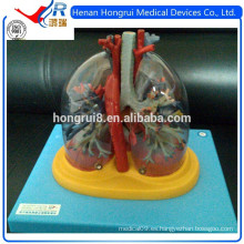 ISO Pulmones transparentes, tráquea, árbol bronquial con modelo de corazón