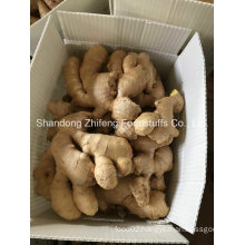 Wholesale Organic Dry Ginger