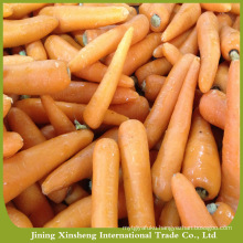 Chines bulk fresh carrots