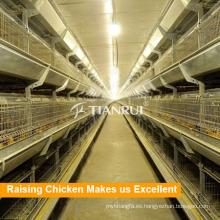 Granja de aves de corral, polla, crianza, jaula de pollo