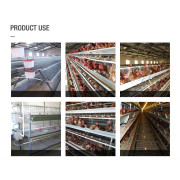A Type Poultry Chicken Equipment