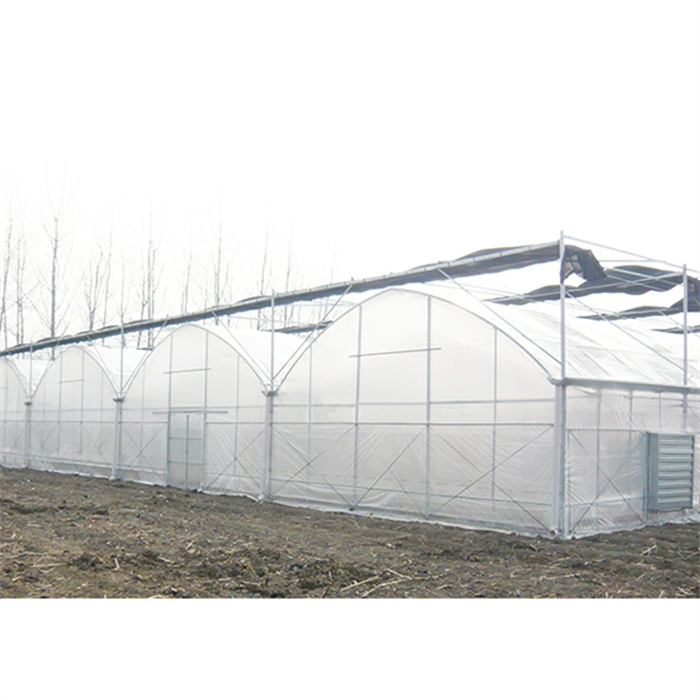 Multi Span Plastic Film Greenhouse For Agriculture