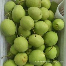 Nouvelle récolte de poire fraîche de haute qualité Pear / Shandong (70-80-90-100)