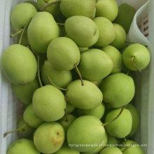 Nouvelle culture de haute qualité Poire fraîche / Shandong poire (70-80-90-100)