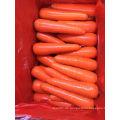 80-150g Neue Frucht Frische Karotte