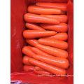 80-150g New Crop Fresh Carrot