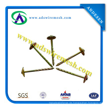 Roofing Nail mit Umbrella Head (Hot Sale & Best Quality)