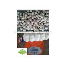 Promoción de ajo blanco fresco