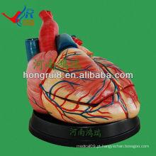 Modelo ISO Anatomia de Coração Jumbo de novo tipo, modelo de coração
