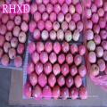 свежие Фудзи страны экспорта яблока китайский зрелый Фуджи яблоко