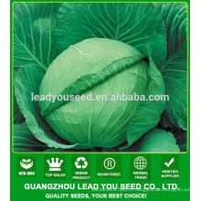 NC06 Renxian F1 hybride graines de chou à haut rendement pour la culture