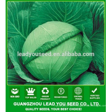 NC06 Renxian F1 hybrid high yield cabbage seeds for growing
