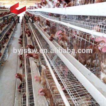 Jaula de pollo de capa para el plan de vivienda de pollo (5000 aves, 10000 aves, 20000 aves)