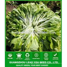 NPK05 Binla зеленый китайский овощ пак Чой семена для открытого воздуха