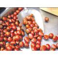 IQF frozen chestnut price per kg