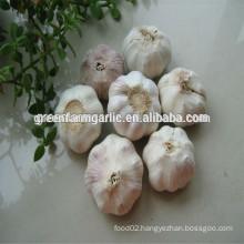 healthy red garlic