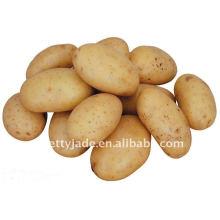 Pommes de terre jaunes fraîches à prix bas en provenance de Chine