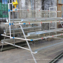 Cage à poulet pour la ponte