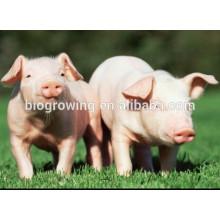 Additifs pour aliments pour animaux en poudre de levure