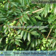 10%-60% HPLC Organic Natural Olive Leaf Plant Extract KS-06