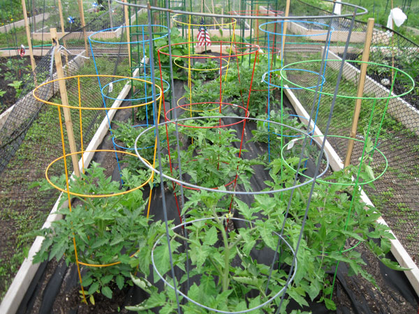 High qulity Tomato cages