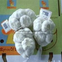 Китайский свежий белый чеснок (обычный белый и чистый белый)