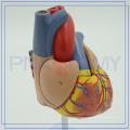 PNT-0400 Modelo de anatomia do coração 3D personalizado