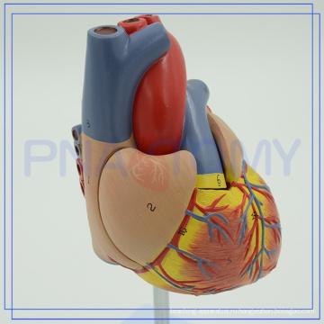 ПНТ-0400 подгонять модель 3D Анатомия сердца