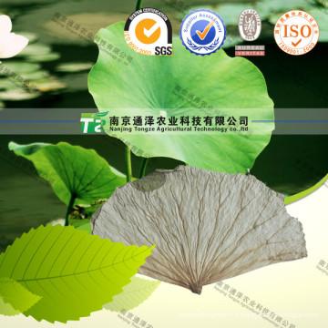 Fabrication Perte de poids Extrait de feuille de lotus 2% 5% Nuciférine