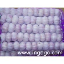 Alho branco normal novo de alta qualidade fresco da colheita