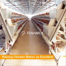 Tianrui conception A Type automatique d'oeufs de poulet couche cage système d'alimentation