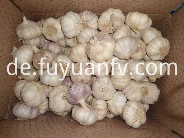 big size garlic 1