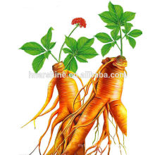 20% Panax Ginseng Extract Powder,extract powder