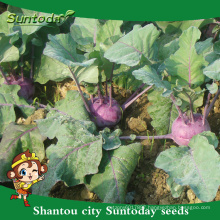 Suntoday netural purple vegetable F1 cultivation of agricultural Organic kolhrabi buying herloom seeds(A44001)