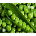 O melhor preço para China ervilhas verdes em conserva de ervilha verde