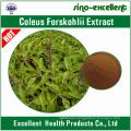 Natural Coleus Forskohlii Extract Forskolin