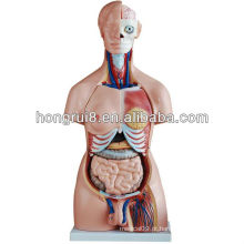 ISO 85CM modelo de torso de sexo duplo de 40 partes