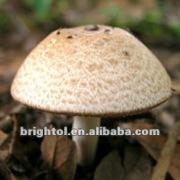 100% Natural Agaricus blazei Murill