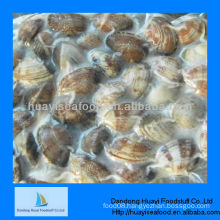 frozen cooked clam meat