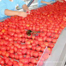 Preço superior e preço competitivo Tomate