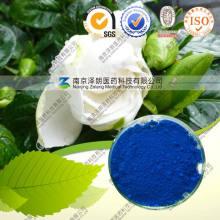 Гардения Синий Цвет