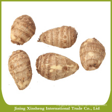 Wholesale fresh taro root