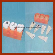Изучение зубов