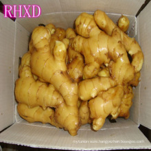 ginger market price per ton