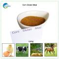 Mais Gluten Mahlzeit Großhandel chinesischen Mais Gluten Mahlzeit Hersteller