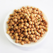For sale chickpeas beans with export bulk chickpea