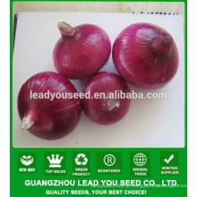 NON02 Hongqiu op graines d'oignon rouge à vendre des graines de légumes de Chine