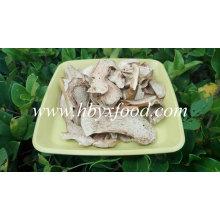 Fornecimento de Suprimentos Profissionais Cogumelo Porcini Selvagem