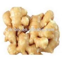 Extrait de plante Fabricant Poudre de gingembre