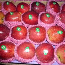 Nouvelle plante Huaniu Apple